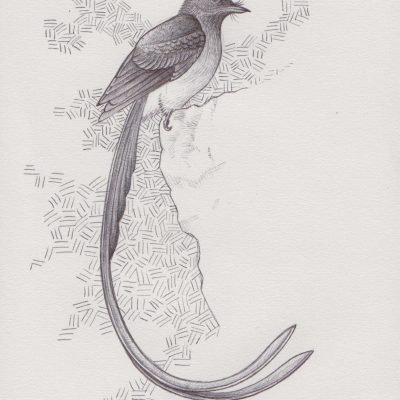 bird 06, painting by Alessandro Bruno.
